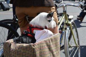 Dog in a basket